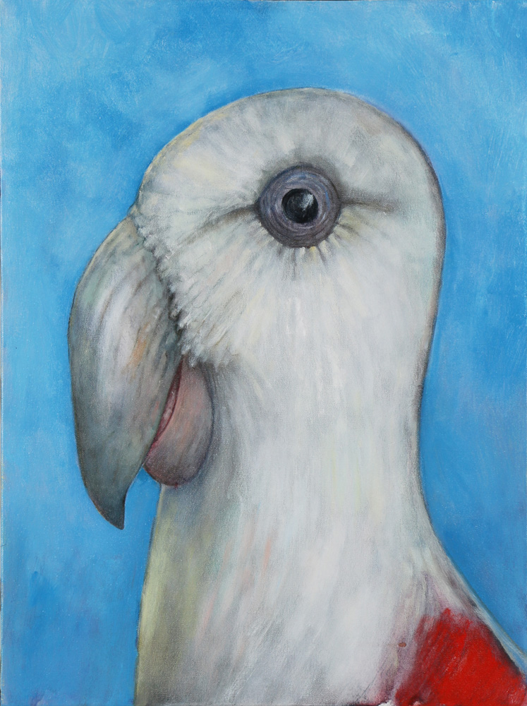 The Northern Nut Parrot