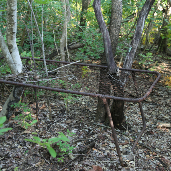 Channel Island Leprosarium site, 1931 – 1955, #4 (bed base with tree trunk), 7 April 2015