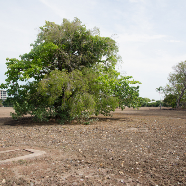 Kahlin Aboriginal Compound site, 1913 – 1939, Myilly Point, 5 November 2014