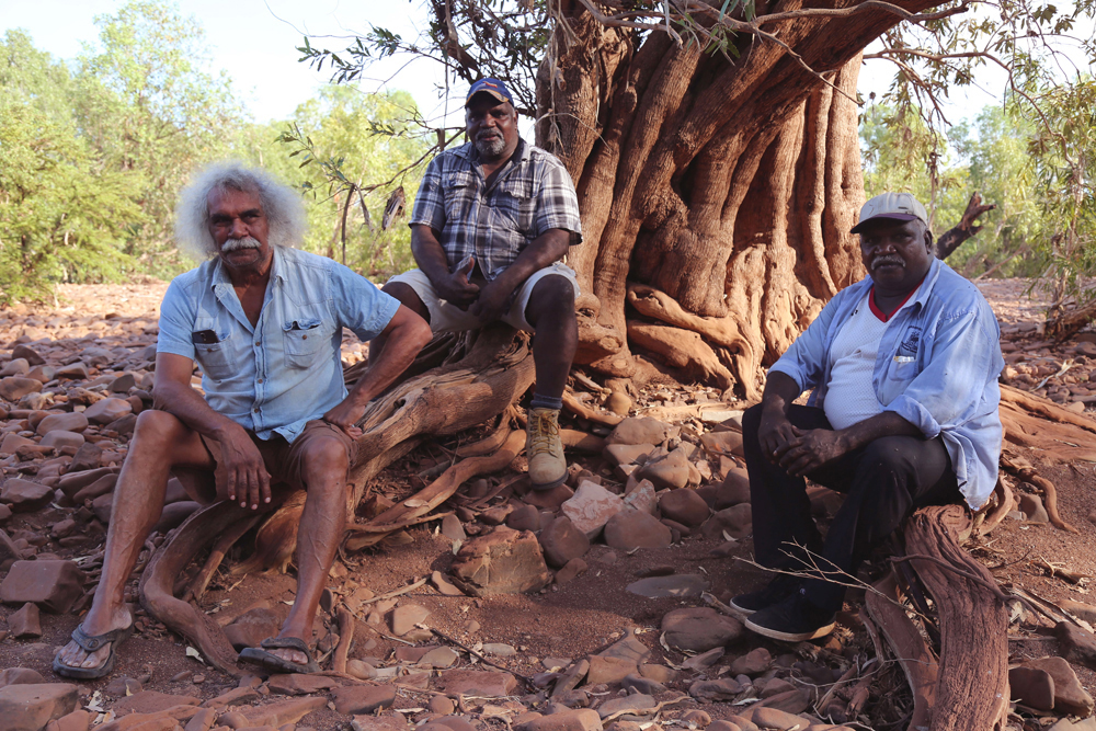 Maurie Ryan Japarta with his cousin/brothers Justin Paddy Japarta and Michael Paddy Japarta, under a pawulyji (swamp box) in the bed of Victoria River, near where Maurie was removed from his family in 1952 by Native Affairs Patrol Officer, Ted Evans, 6 April 2015