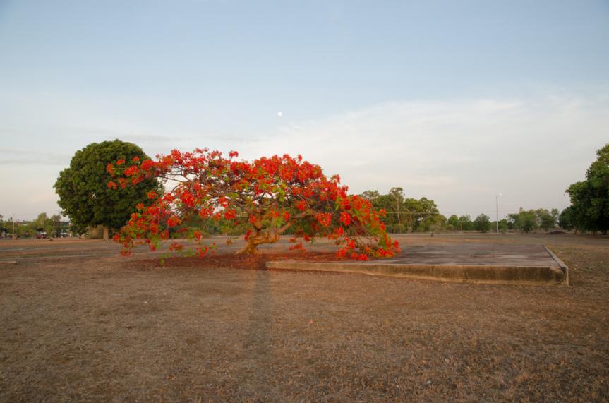 Self-portrait, Cottage foundation Retta Dixon Home site (1946 – 1982), Karu Park, 5 November 2014